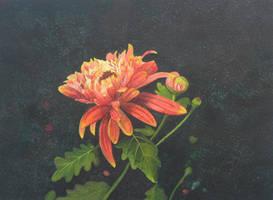 Chrysanthemum by aakritiarts