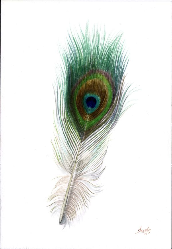 Peacock Feather by aakritiarts