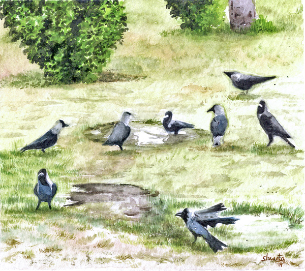 Garden Crows by aakritiarts