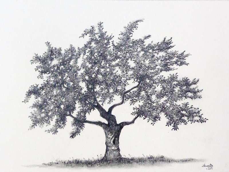 Apple Tree Graphite Drawing By Aakritiarts ...