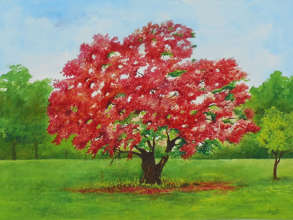 Red Flamboyant tree by aakritiarts