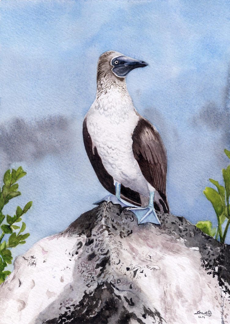 Bluefooted Booby Bird by aakritiarts