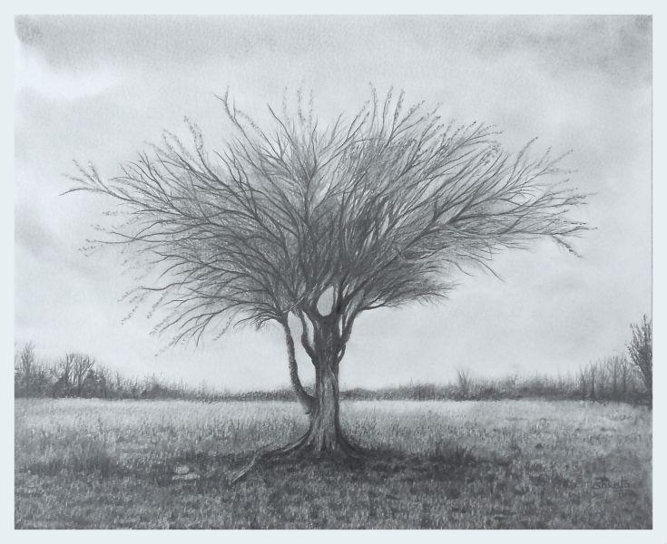 Mulga Acacia by aakritiarts