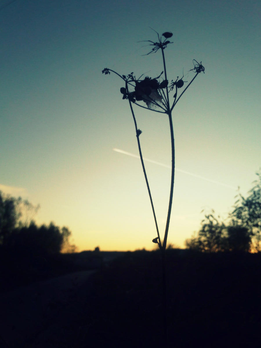 PLANT by Nikoleta036