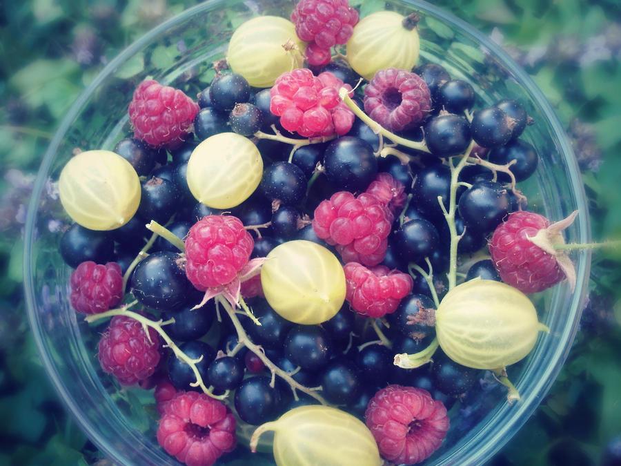 Summer refreshment by Nikoleta036