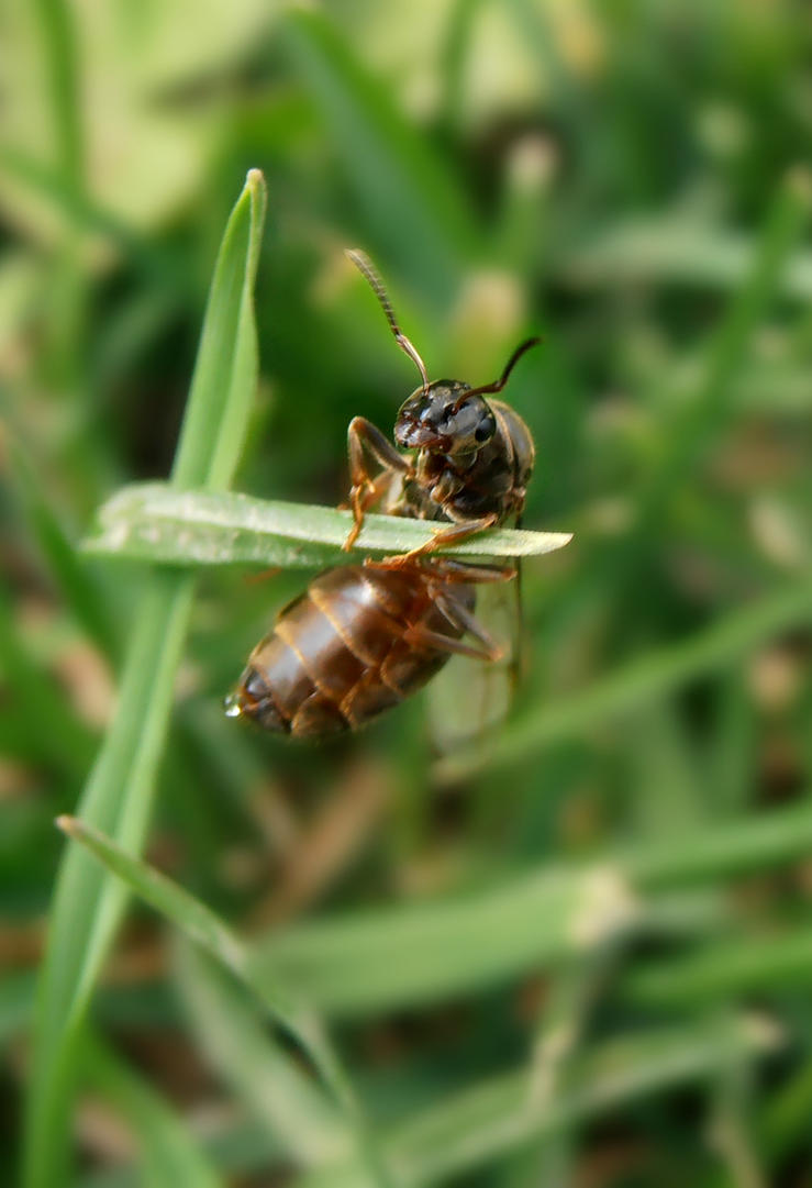 ANT by Nikoleta036