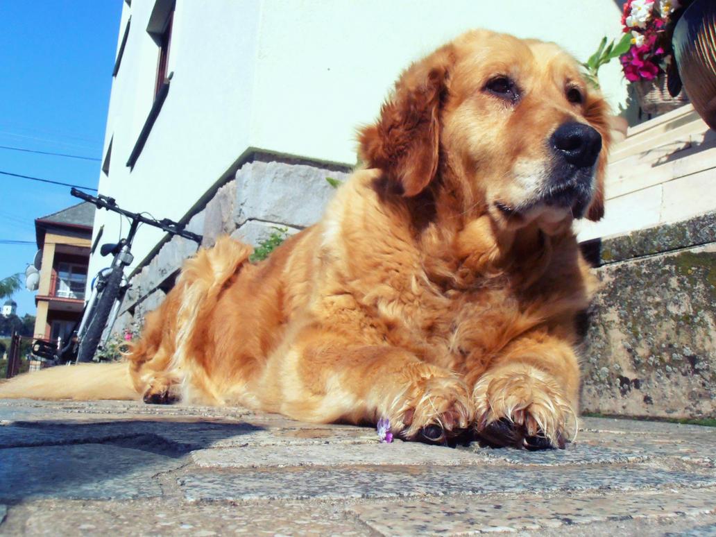 Our Dog by Nikoleta036