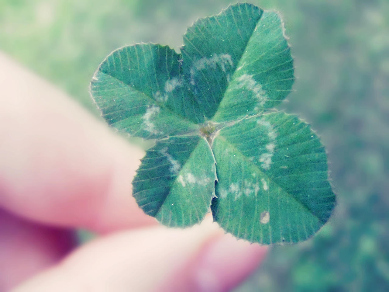 Four-Leaf Clover by Nikoleta036