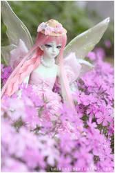 Sugarland where fairies dwell