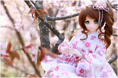 Cherry blossoms 2017 by sherimi