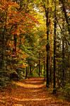 Fall Path by dark4Maxine