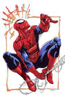 Spider-Man colored SOTD