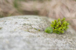 Moss on a stone I brought back from Scotland by ianwh