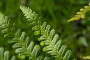 Rain Drop On Fern Leaves by ianwh