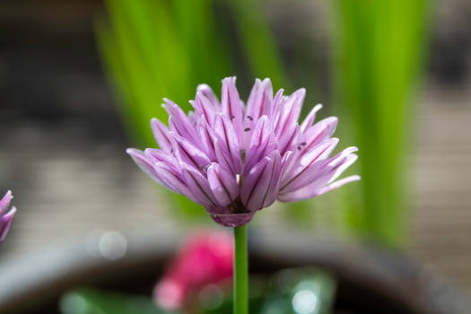 chives on the 25th May 20
