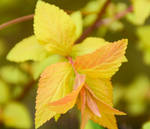 My Favourite Leaves 5