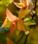 My Favourite Leaves 6
