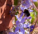Bee On Blue Weeds