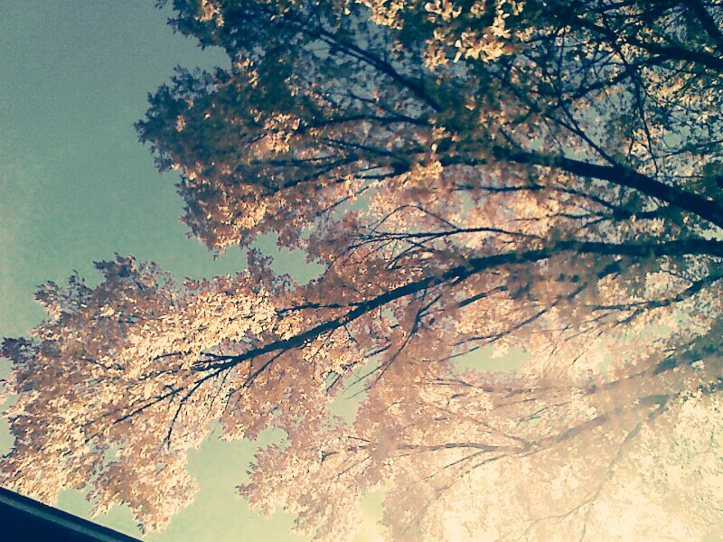 vintage fall backgrounds with - photo #5