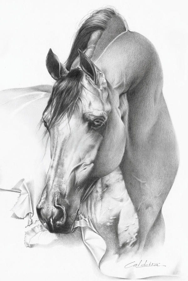 1000 Images About Horse Art On Pinterest