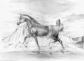 Arabian Horse II by CaldeiraSP
