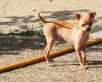 Louie in the Backyard