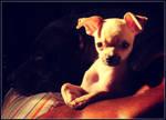 Diamond and Louie