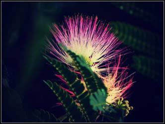 Interesting Flower by sentry-sight