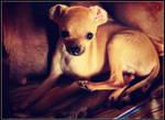 Louie Boo