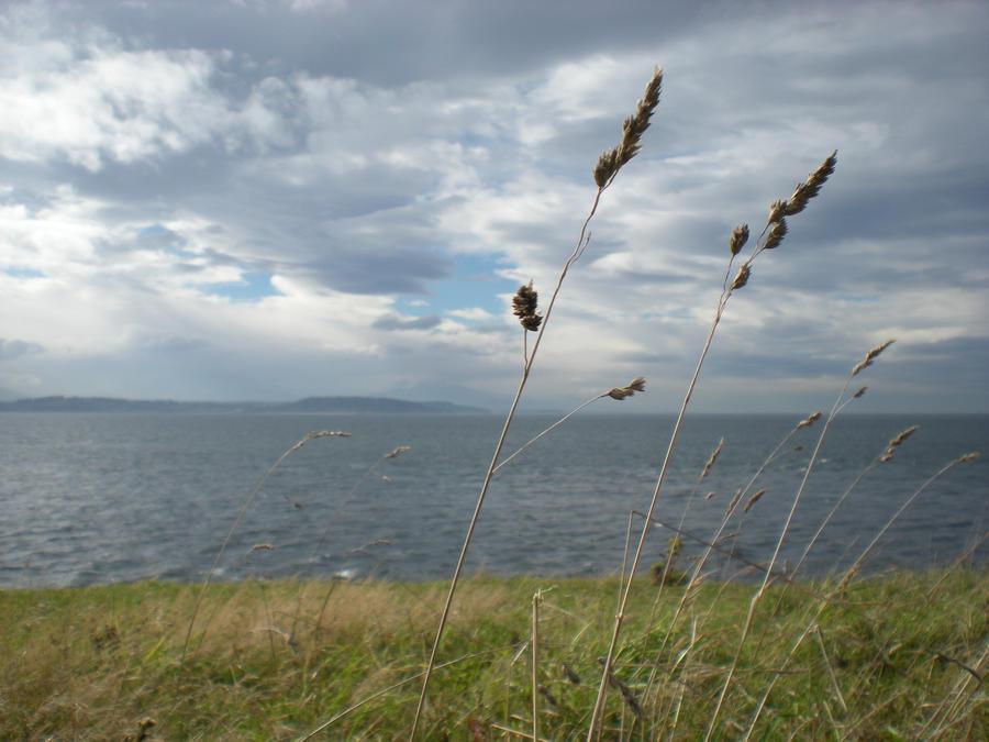Wind by SachiyeKazumi