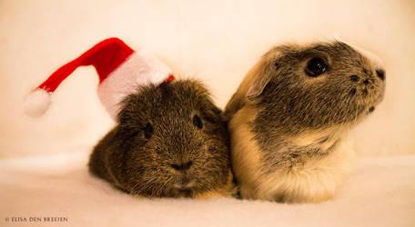 Christmas piggies !