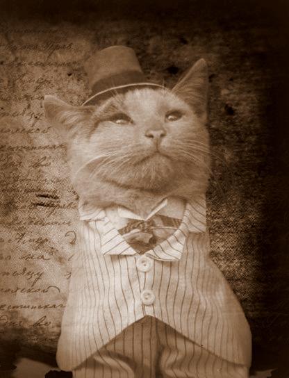 cat by Anachreon