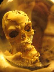 skull by emo-shinigami