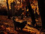 Autumn trespasser