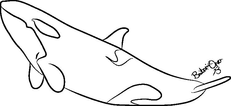 Orca Lineart by Britannia-Orca