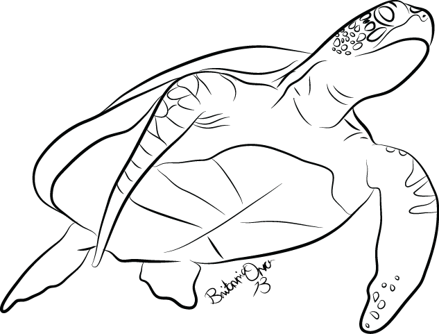 Sea Turtle Line Drawing Sketch Coloring Page