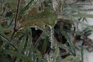Frozen in Time by MoesArts