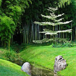 Bamboo by Gazounette
