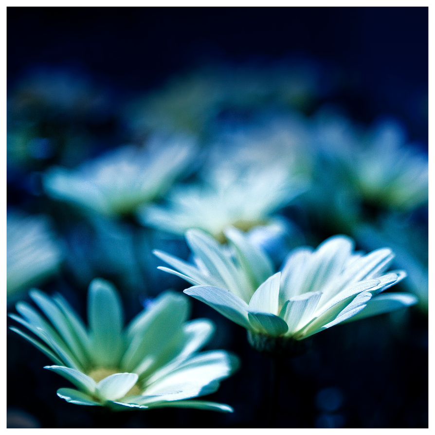 Blue mood by Gazounette