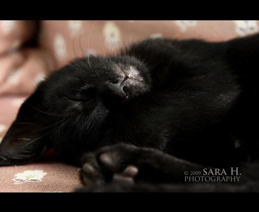 Jaguar by sara-hel