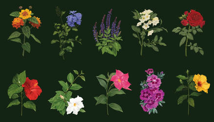 Sudkultur - Botanical illustrations