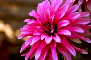 Flower 3 by Tina-Roar