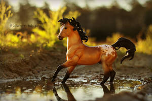 ~{~ giving the World a splash of Gold ~}~ by SilverCrescents