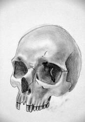 Skull sketch 15min by teedark