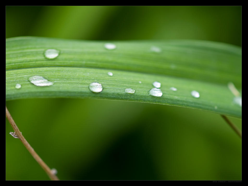 Water Droplets by FT69
