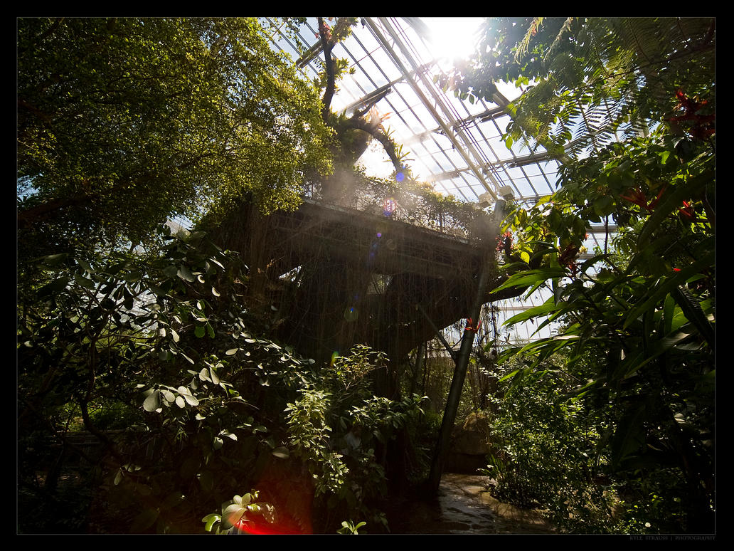 Greenhouse Vines by FT69
