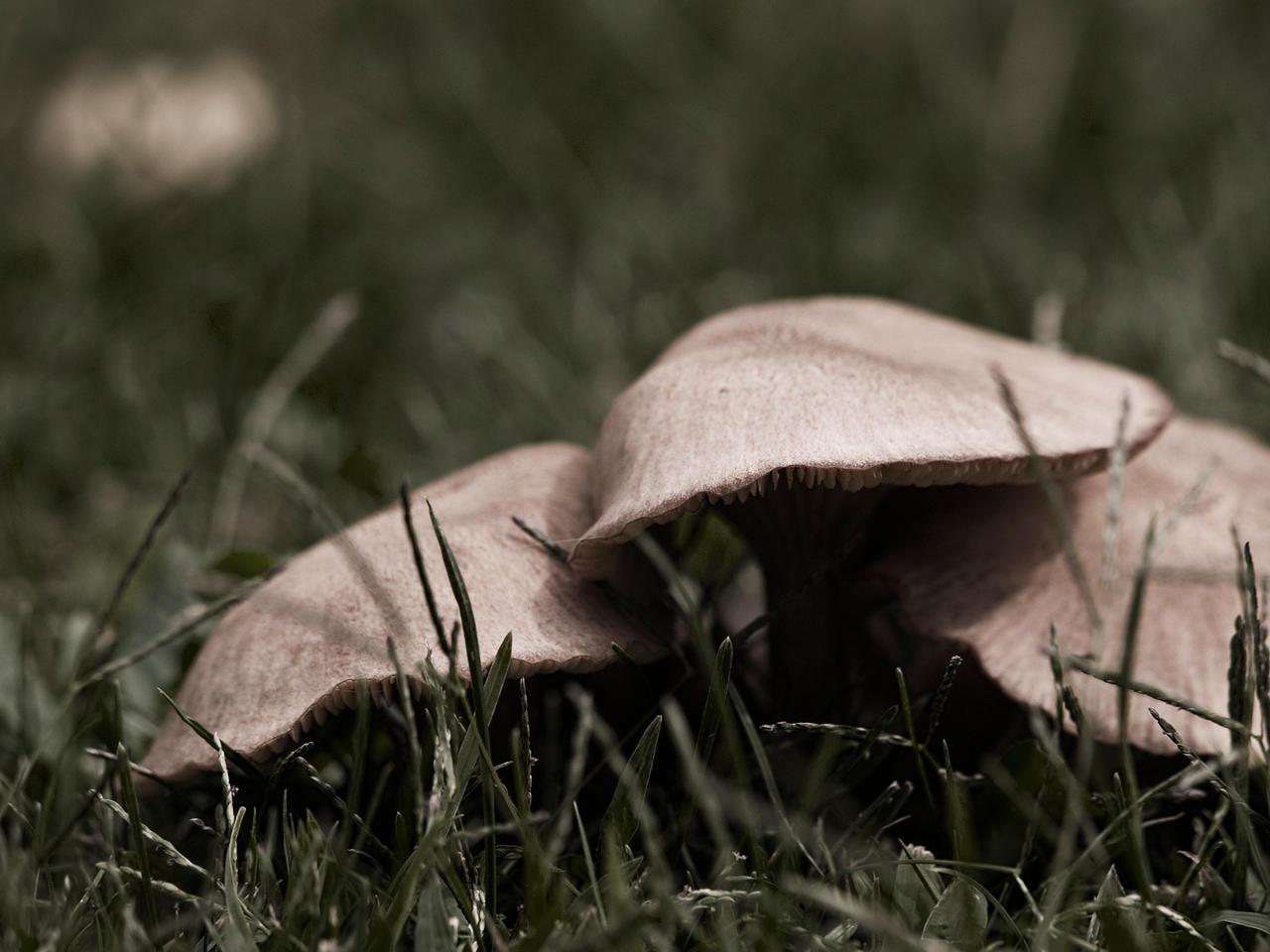 Mushroom Trees by FT69