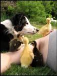 Climbing Ducks.
