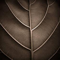 A Leaf by HolgaVision
