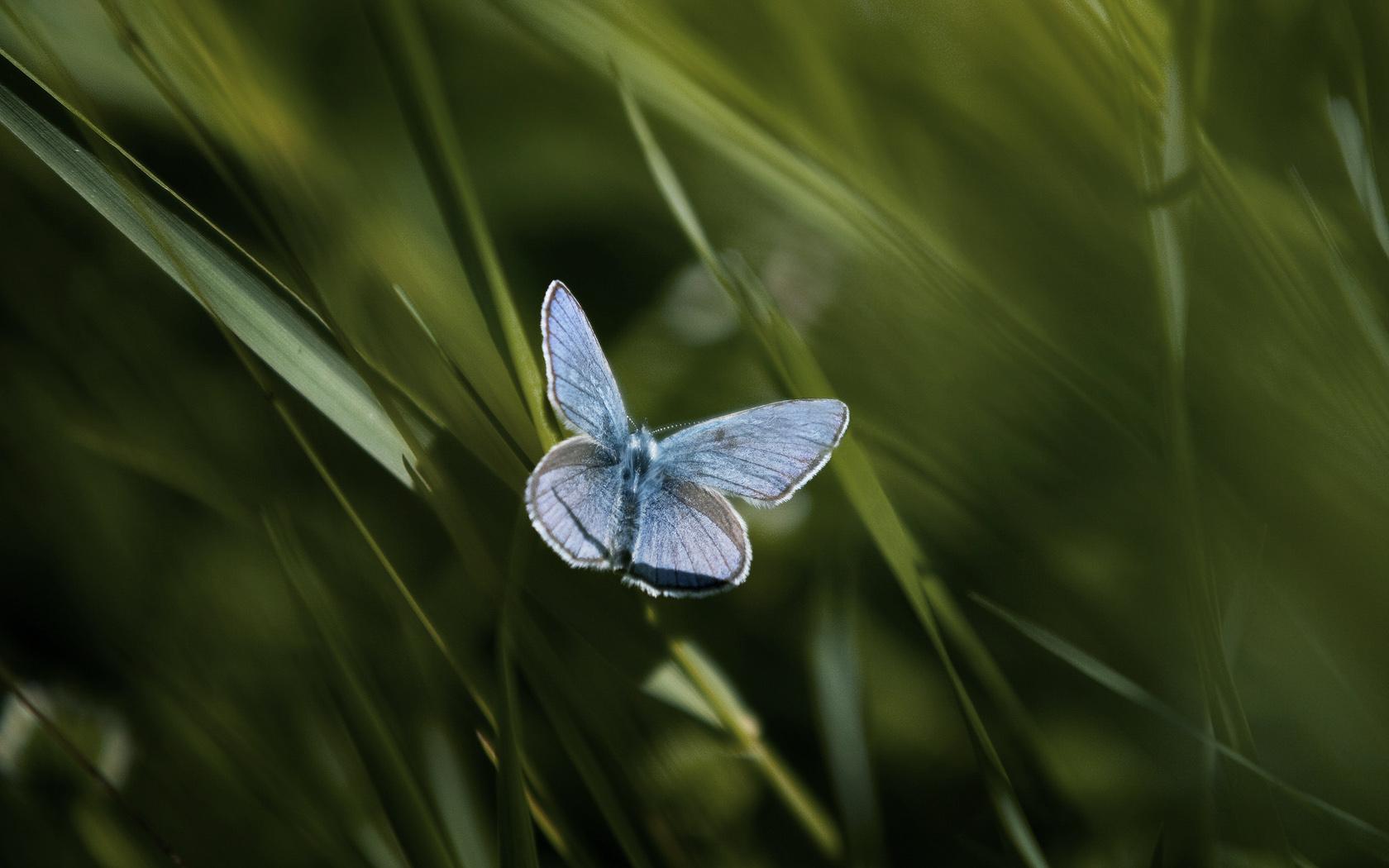 Lepidoptera by Smattila